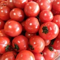 甘~いフルーツトマト「越のルビー」の秋物が入荷しました