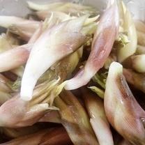 日本人だけが食べる「ミョウガ」は夏バテ予防の実力者!