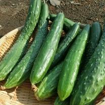 野菜売り場の「キュウリ」は今と昔で全然違う!?